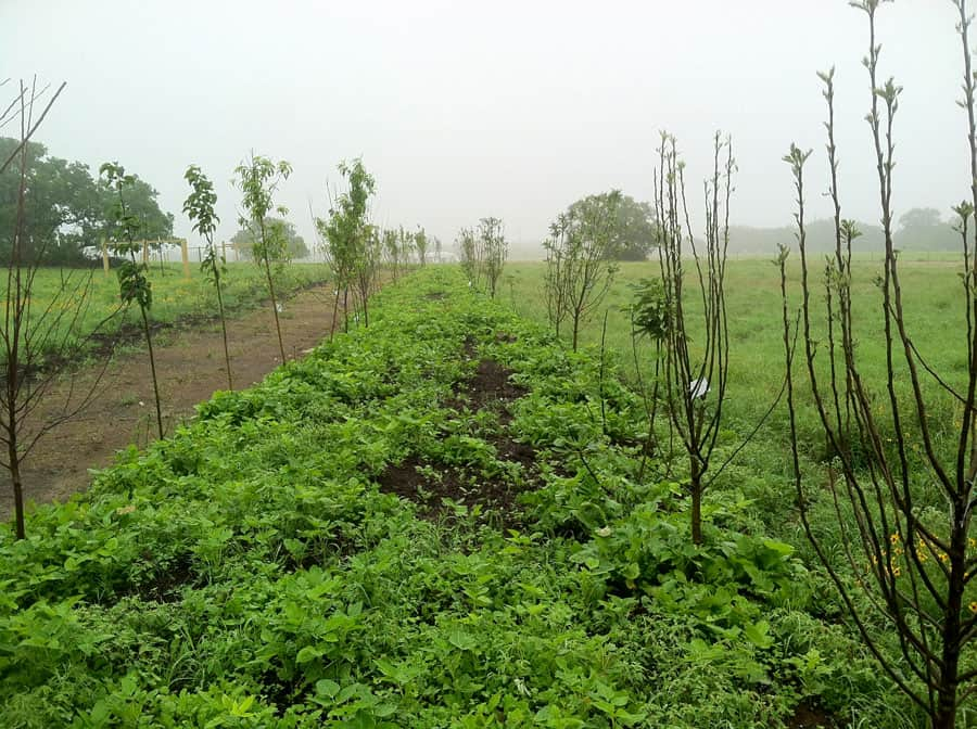 For-Profit Permaculture Farm